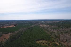 106 Acre Hunting/Timber Tract in Polk, TX (6 of 20)