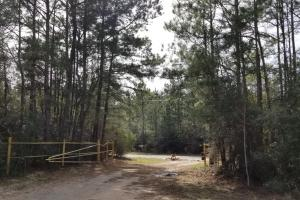 106 Acre Hunting/Timber Tract in Polk, TX (13 of 20)