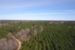 Large Acre Hunting/Timber Tract