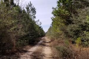 106 Acre Hunting/Timber Tract in Polk, TX (18 of 20)