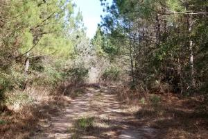 106 Acre Hunting/Timber Tract in Polk, TX (19 of 20)