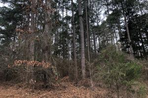 Dumas Lake Tract in Tippah, MS (14 of 14)