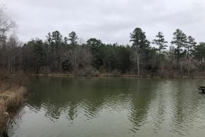 Dumas Lake Tract - Tippah County MS