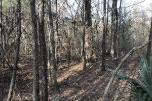 216 acres Deer Hunting and Timber near Oak Grove, La - West Carroll Parish LA