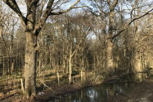 216 acres Deer Hunting and Timber near Oak Grove, La in West Carroll, LA (26 of 27)