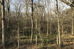 216 acres Deer Hunting and Timber near Oak Grove, La in West Carroll, LA (27 of 27)