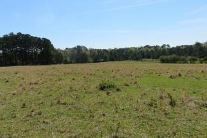 Homesite with pasture in Rankin, MS (13 of 20)
