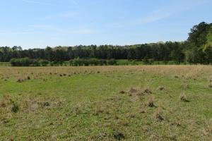 Homesite with pasture in Rankin, MS (14 of 20)