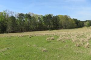 Homesite with pasture in Rankin, MS (18 of 20)
