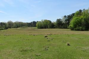 Homesite with pasture in Rankin, MS (11 of 20)