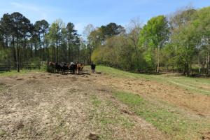 Homesite with pasture in Rankin, MS (8 of 20)