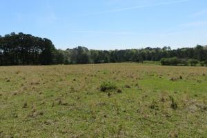 Homesite with pasture in Rankin, MS (12 of 20)
