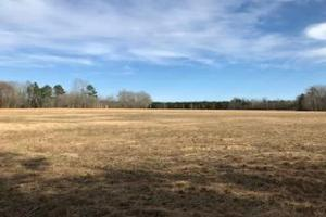 Colburn Recreational Tract, Farm, Deer, Turkey, Dove and Waterfowl in Dillon, SC (9 of 32)