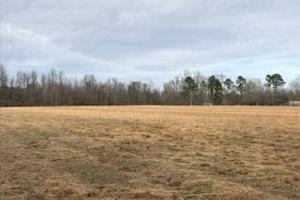 Colburn Recreational Tract, Farm, Deer, Turkey, Dove and Waterfowl in Dillon, SC (31 of 32)