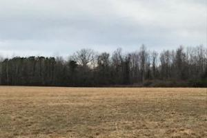 Colburn Recreational Tract, Farm, Deer, Turkey, Dove and Waterfowl in Dillon, SC (21 of 32)