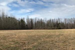 Colburn Recreational Tract, Farm, Deer, Turkey, Dove and Waterfowl in Dillon, SC (20 of 32)
