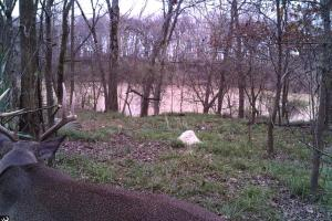 Deer Hunting on 143 acres of CRP and Mature Timber on Boeuf  River - West Carroll Parish LA