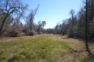 Hunting-Recreational Tract in Montgomery, TX (11 of 24)