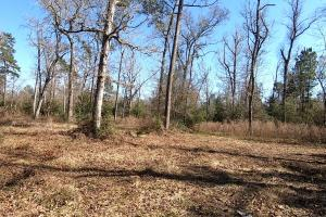 Hunting-Recreational Tract in Montgomery, TX (16 of 24)