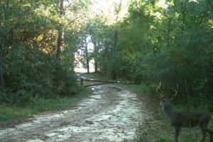 Hunting-Recreational Tract in Montgomery, TX (2 of 24)