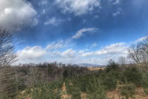 New River Hunting and Timber Tract