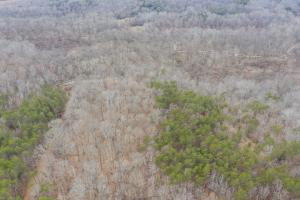 Caswell Hunting Tract in Caswell, NC (79 of 98)