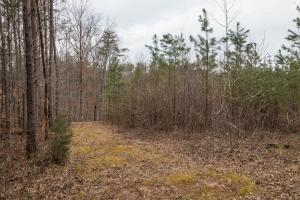 Caswell Hunting Tract in Caswell, NC (67 of 98)