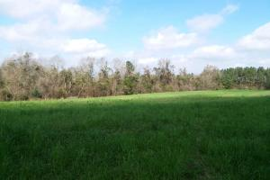 Red Level Homesite & Cropland Tract - Covington County AL