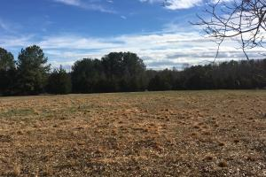 Horse Property with Open Land & Hardwoods in Anderson, SC (11 of 36)