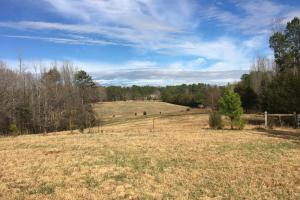 Horse Property with Open Land & Hardwoods in Anderson, SC (21 of 36)