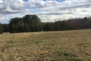 Horse Property with Open Land & Hardwoods in Anderson, SC (25 of 36)