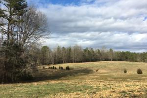 Horse Property with Open Land & Hardwoods in Anderson, SC (19 of 36)