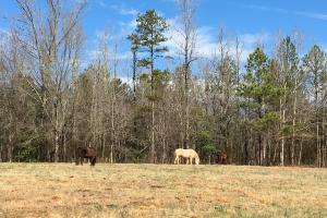 Horse Property with Open Land & Hardwoods in Anderson, SC (10 of 36)
