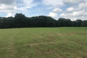 21 acres near Cedar Creek Lake, Rolling pasture, Timber, Ponds in Henderson, TX (5 of 10)