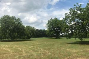 21 acres near Cedar Creek Lake, Rolling pasture, Timber, Ponds in Henderson, TX (4 of 10)