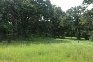 21 acres near Cedar Creek Lake, Rolling pasture, Timber, Ponds in Henderson, TX (2 of 10)
