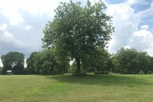 20 acres near Cedar Creek Lake, Excellent mix of Timber and Rolling Pasture in Henderson, TX (9 of 15)
