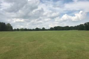 20 acres near Cedar Creek Lake, Excellent mix of Timber and Rolling Pasture in Henderson, TX (10 of 15)