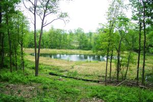 0 South Tower Rd, Garrison (Mille Lacs Lk Area): view of pond