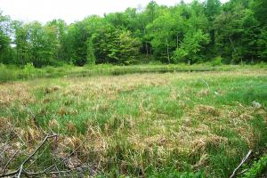 0 South Tower Rd, Garrison (Mille Lacs Lk Area): woods, open ground, pond for you to enjoy! (10 of 17)
