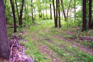 0 South Tower Rd, Garrison (Mille Lacs Lk Area): trail thru site (8 of 17)