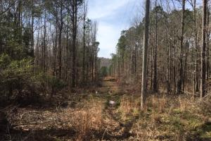 Boardtree Creek Hunting & Timber Tract - Marion County AL