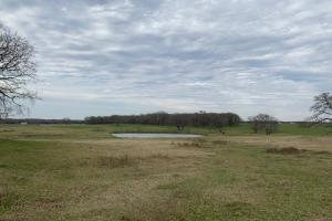 1 of 2 ponds on 66 acres North of Mabank  (4 of 5)