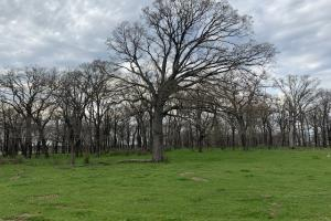 Timber on 66 acres near Mabank  (3 of 5)