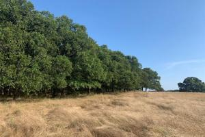 66 acres on Bar 10 Ln with large mature trees (4 of 15)