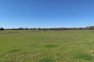 Gentle rolling terrain on 24 acres North of Mabank  (3 of 9)
