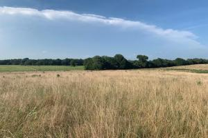 24 Acres  North of Mabank, Farmland and Investment Opportunity