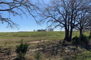 20 Acres in Mabank ISD, Agriculture Opportunities, Scenic Meadow - Kaufman County TX