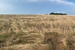 Excellent grasslands on 20 acre tract in kaufman County (4 of 5)