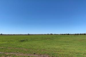 20 acres North of Mabank  (3 of 5)